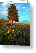 Desert Pines Meadow Greeting Card