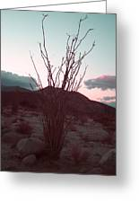 Desert Plant And Sunset Greeting Card