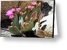 Desert Plants - Fuchsia Cactus Flowers Greeting Card