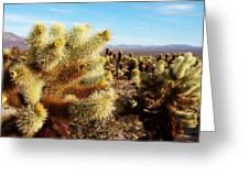 Desert Plants - Porcupine Cholla Greeting Card