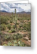 Desert Renewel Greeting Card