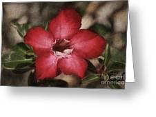 Desert Rose In Daytona Greeting Card