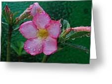Desert Rose On Green Greeting Card
