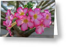Desert Rose Or Chuanchom Dthb2105 Greeting Card