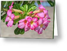 Desert Rose Or Chuanchom Dthb2106 Greeting Card