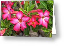 Desert Rose Or Chuanchom Dthb2108 Greeting Card