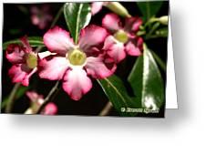 Desert Rose X4 Greeting Card