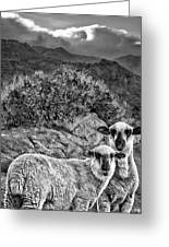 Desert Sheep Greeting Card