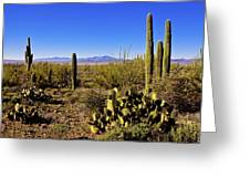 Desert Spring Greeting Card by Chad Dutson