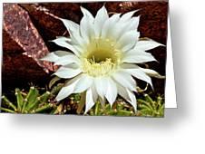 Desert Star Greeting Card