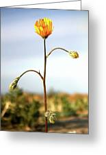Desert Sun Flower Greeting Card
