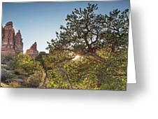 Desert Sunburst Greeting Card