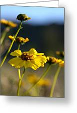 Desert Sunflower Greeting Card