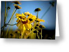 Desert Sunflower Variations Greeting Card