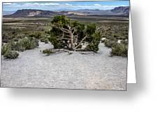 Desert Tree Greeting Card