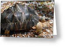 Desert Turtle With An Unusual Shell In The Wild Greeting Card