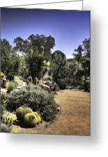 Desert Walkway Greeting Card
