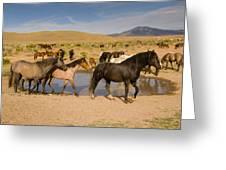 Desert Water Greeting Card
