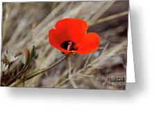 Desert Wildflower Greeting Card