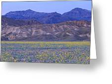Desert Wildflowers, Death Valley Greeting Card