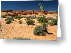 Desert Yucca In Bloom Valley Of Fire Greeting Card
