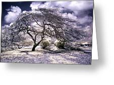 Desertic Tree Greeting Card
