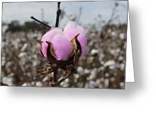 Designer Cotton Greeting Card