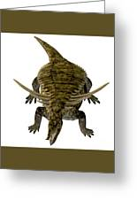 Desmatosuchus On White Greeting Card