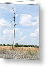 Desolate Tree Greeting Card
