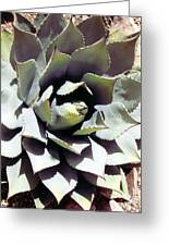Dessert Agave Greeting Card