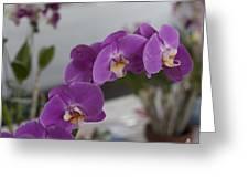 Dessert Orchids Greeting Card