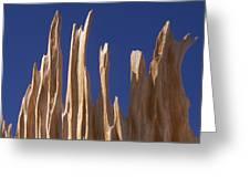 Detail Of Bristlecone Pine Greeting Card