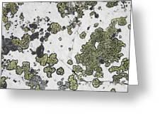 Detail Of Lichen On A White Rock Lake Greeting Card