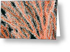 Detail Of Sea Fan, Or Gorgonian Coral Greeting Card