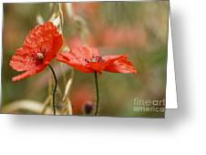 Detail Of The Corn Poppy Greeting Card