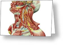 Detailed Dissection View Of Human Neck Greeting Card