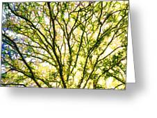 Detailed Tree Branches 1 Greeting Card