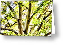 Detailed Tree Branches 2 Greeting Card