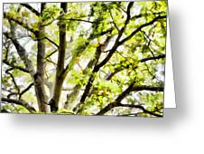 Detailed Tree Branches 3 Greeting Card