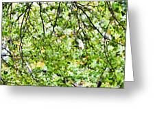 Detailed Tree Branches 4 Greeting Card