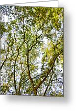 Detailed Tree Branches 5 Greeting Card