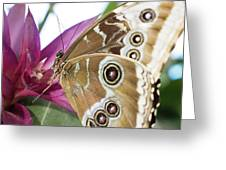 Detailed Wings Greeting Card