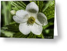 Details Greeting Card
