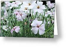 Details In Soft White Greeting Card