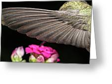 Details Of The Hummingbird Wing Greeting Card