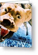 Devil Dog Underwater Greeting Card