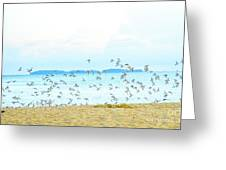Devil's Island  Greeting Card