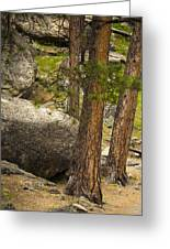 Devils Tower Trees Greeting Card