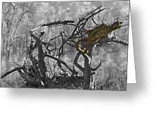 Devil's Tree Greeting Card
