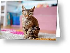 Devon Rex Purebred Domestic Cat Greeting Card